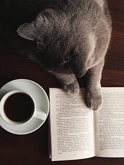 Coffebookcat